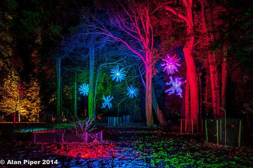 Westonbirt Tree Lights (PapaPiper)